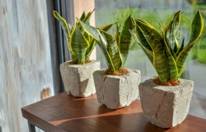 plants to keep at home